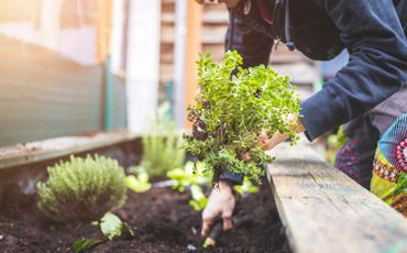 Garden-decoration-
